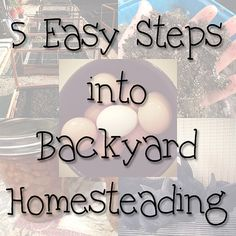 5 Easy Steps into Backyard Homesteading http://imperfectlyhappy.com/5-easy-steps-into-backyard-homesteading-2/?utm_campaign=coschedule&utm_source=pinterest&utm_medium=Imperfectly%20Happy%20(Backyard%20Chickens)&utm_content=5%20Easy%20Steps%20into%20Backyard%20Homesteading