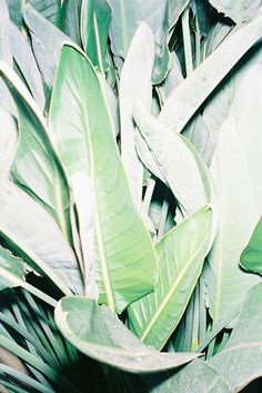 Leaves | Bohemian Photography