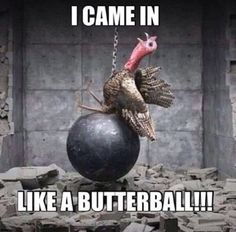 37 Funny Thanksgiving Pictures That Will Make You Miss The Holidays