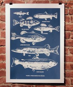 Fresh Water Fish Chart - Dark Blue by Smash Inventory, via Flickr