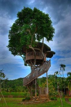 Tree Home Pictures! This is a collection of Tree house pictures that are worthy of living in. A Dreamers Dream! Beautiful Tree Houses, Cool Tree Houses, Magical Tree, Tree House Designs, Home Pictures, Plantation, In The Tree, Big Tree, Play Houses