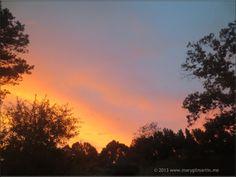 Night Sky/Sunset - tree silhouette