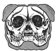 An Illustrated Guide to the Bulldog Standard, English Bulldog Standard, English Bulldog Colors, English Bulldog Size Bulldog Pics, Bulldog Puppies, Baby Bulldogs, Skull Illustration, 1 Gif, Pug Love, Pugs, Fur Babies, English