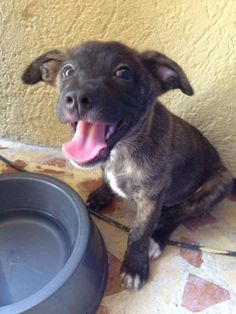 This is my pup (Kodos) as a baby in Mexico! http://ift.tt/2rTT35U