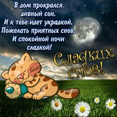Спокойной ночи Good Night, Family Guy, Humor, Words, Funny, Quotes, Have A Good Night, Nighty Night, Quotations
