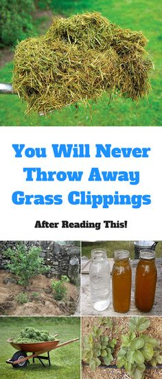 Grass clippings aren't going away if you have a lawn. There is so much more you can do with grass-clippings than just throwing them in the garbage. Here are some ideas for you to try in your garden to put that grass to some good use. 1. Compost Add fresh grass clippings to the compost. Collect …