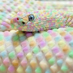 Skittles the snake!!