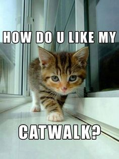 How do u like my catwalk?