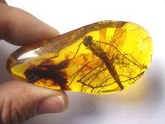 Ancient Amber - dragonfly -50 million years old!