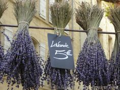 lavender in the Uzes market France Photography, Southern France, France Travel, France Vacations, Finding Yourself, Shutters, Sunflowers, Medieval, Lavender