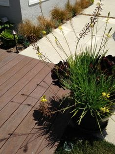 SPgardens: Landscape projects - Encinitas, CA - Timber Tech recycled wood decking and permeable concrete areas with narrow strips of plantings.