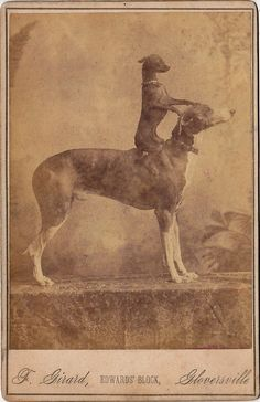 Don the Greyhound and His Terrier - PROJECT B - Vintage Photographs, Curatorial Projects & Limited Edition Prints