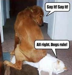 Something Tells Me These 8 Dogs Are NOT Cat People - Funny Dog Quotes - funny dog pictures with captions Bing Images The post Something Tells Me These 8 Dogs Are NOT Cat People appeared first on Gag Dad. Funny Dog Captions, Dog Quotes Funny, Funny Animal Pictures, Funny Humour, Dog Humor, Funny Images, Humour Quotes, Funniest Pictures, Cat Quotes