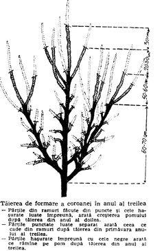 Bushcraft, Terrarium, Hair Accessories, Gardening, Design, Agriculture, Plant, Life, Terrariums