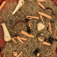 Hay and mixed winter veg sensory tray