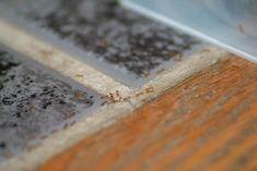 appat fourmis