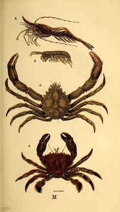 The common objects of the sea shore : 1859 - Biodiversity Heritage Library