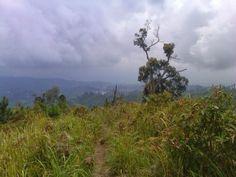 Salah satu jalur pendakian Gunung Prau di Dieng, Jawa Tengah