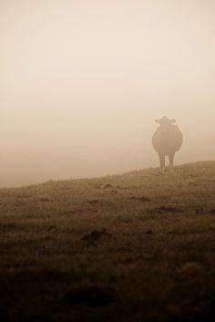 Morning Fog, via Flickr