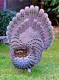 Animals Discover Grey Peacock Pheasant Beautiful birds Always look like a woman. blue bird of paradise Pretty Birds Beautiful Birds Animals Beautiful Animals Amazing Simply Beautiful Exotic Birds Colorful Birds All Birds Love Birds Pretty Birds, Beautiful Birds, Animals Beautiful, Animals Amazing, Simply Beautiful, Exotic Birds, Colorful Birds, Exotic Pets, All Birds