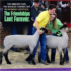 Friendship Livestock Judging, Livestock Farming, Showing Livestock, Country Girl Quotes, Country Girls, Farm Quotes, Country Life, Ffa, Show Steers