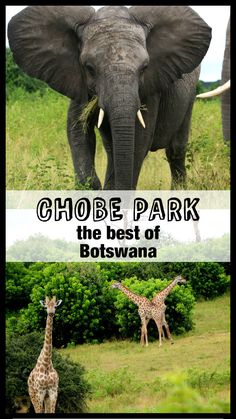 Complete guide to Chobe National pakr, Botswana Chobe National Park, National Parks, Travel Advice, Travel Guides, Travel Tips, Going To Cuba, Future Travel, Africa Travel, Travel Couple