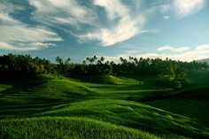 A Balinese morning by nicointhebus (nicolas monnot)