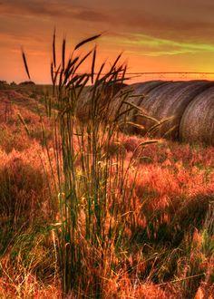 Landscapes   Randy Watkins Photography