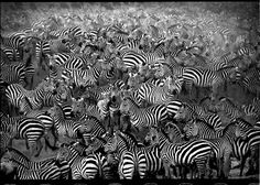 Afbeeldingsresultaat voor world press photo 2015 black white Types Of Photography, White Photography, Nature Photography, Tanzania, Harper's Magazine, World Press, Photo Awards, Social Art, Lomography