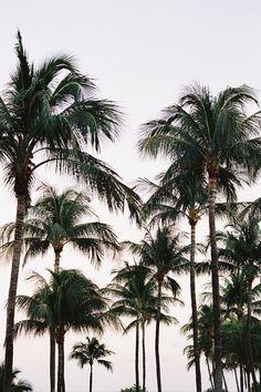 Photography from Miami Beach, Florida Moving To Florida, Florida Travel, Miami Florida, Miami Beach, Beach Aesthetic, Travel Aesthetic, Florida Wallpaper, Miami Life, Photo Journal