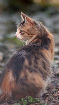720x1280 wallpaper Cat, outdoor, blur, pet animal