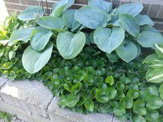hasselört dela Summer House Garden, Home And Garden, Shade Garden, Garden Plants, White Gardens, Shade Plants, Gras, Garden Inspiration, Garden Ideas