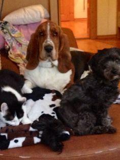 Freunde finden bei den Naturidyllern - das ist wahre Hundefreundschaft Das Hotel, Hotels, Dogs, Animals, Find Friends, Pet Dogs, Animales, Animaux, Doggies