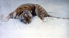 Sudden Move - Siberian Tiger - Limited Edition Giclee Print by Robert Bateman