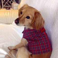 Chaleco reversible  perro en tartán rojo, ropa perro. Diseño exclusivo de Mucka Pets. de MuckaPets en Etsy