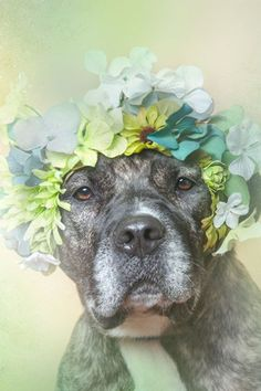 This Photo Series Is What Dreams Are Made Of #refinery29  http://www.refinery29.com/2014/09/74356/sophie-gamand-flower-power-dogs#slide-4  Tulip is currently available for adoption at Town of Hempstead Animal Shelter....