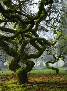 'Old Moss Woman's Secret Gardens