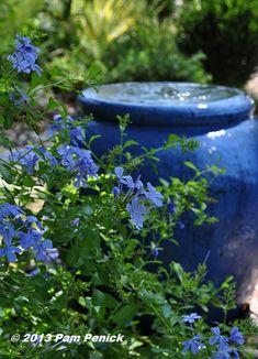 Cooling color echo: blue plumbago and a bubbling blue fountain Blue Garden, Colorful Garden, Garden Pots, Garden Cottage, Blue Plumbago, Prayer Garden, Water Features In The Garden, Mediterranean Garden, Garden Fountains