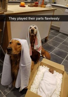 23 Holiday Animal Memes As A Forewarning Of What's To Come And To Bring You Joy, Obviously - Funny Dogs - Chien Cute Animal Memes, Animal Jokes, Cute Funny Animals, Funny Animal Pictures, Cute Baby Animals, Funny Cute, Cute Cute, Super Funny, Hilarious Animal Memes