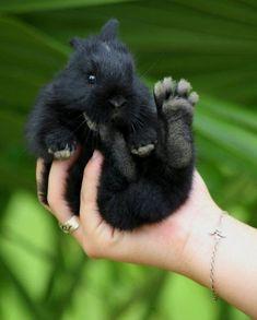 Foxy rabbit #rabbitlove