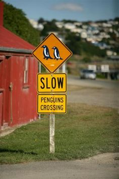 This sign is in Oamaru and the penguins do cross the road! (New Zealand)