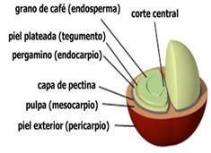 Cáscara del café
