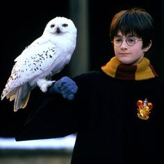 When ten-year-old Daniel was asked whether he was anything like Harry, he said, 'I think I'm a tiny bit like Harry. I'd like to have an owl.' #HarryPotter