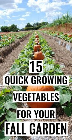 As fall approaches, summer crops begin to wind down and the plants which loves heat tend to reduces its growth.#Vegetables #FallGarden