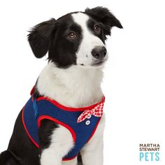 Keep your pup safe and restrained during outings with the Martha Stewart Pets® American Denim Vest Harness - PetSmart $24.99