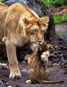 Мать и дитя. - Путешествуем вместе