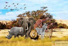 The Big 5 Of Africa - The Most Dangerous Animals In Africa - World Docum. Tier Wallpaper, Animal Wallpaper, Radios, 2880x1800 Wallpaper, Baby Animals, Funny Animals, Wild Animals, Jungle Illustration, Cartoon Head