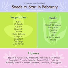 Seed Chart - Seed Starting In February - Roots Nursery Garden Seeds, Planting Seeds, Garden Plants, Butterfly Weed, Head Of Lettuce, Starting Seeds Indoors, Seed Starting, Hair And Beard Styles, Flower Seeds