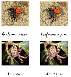 Een algemene les over de spin - Montessorinet
