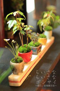 Bonsai pretend. ... Sometimes the camera. Bonsai Tree Care, Bonsai Art, Bonsai Plants, Miniature Plants, Miniature Fairy Gardens, Moss Garden, Garden Pots, Ikebana, Mini Bonsai